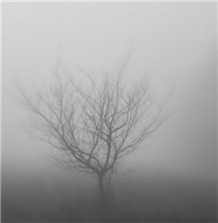 Nebelschlussleuchte